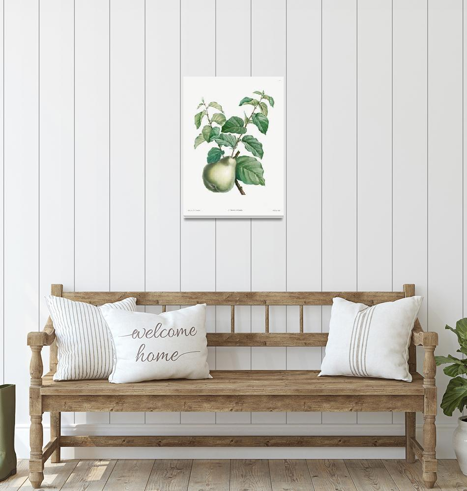 """Pear Fruit Vintage Botanical""  by FineArtClassics"