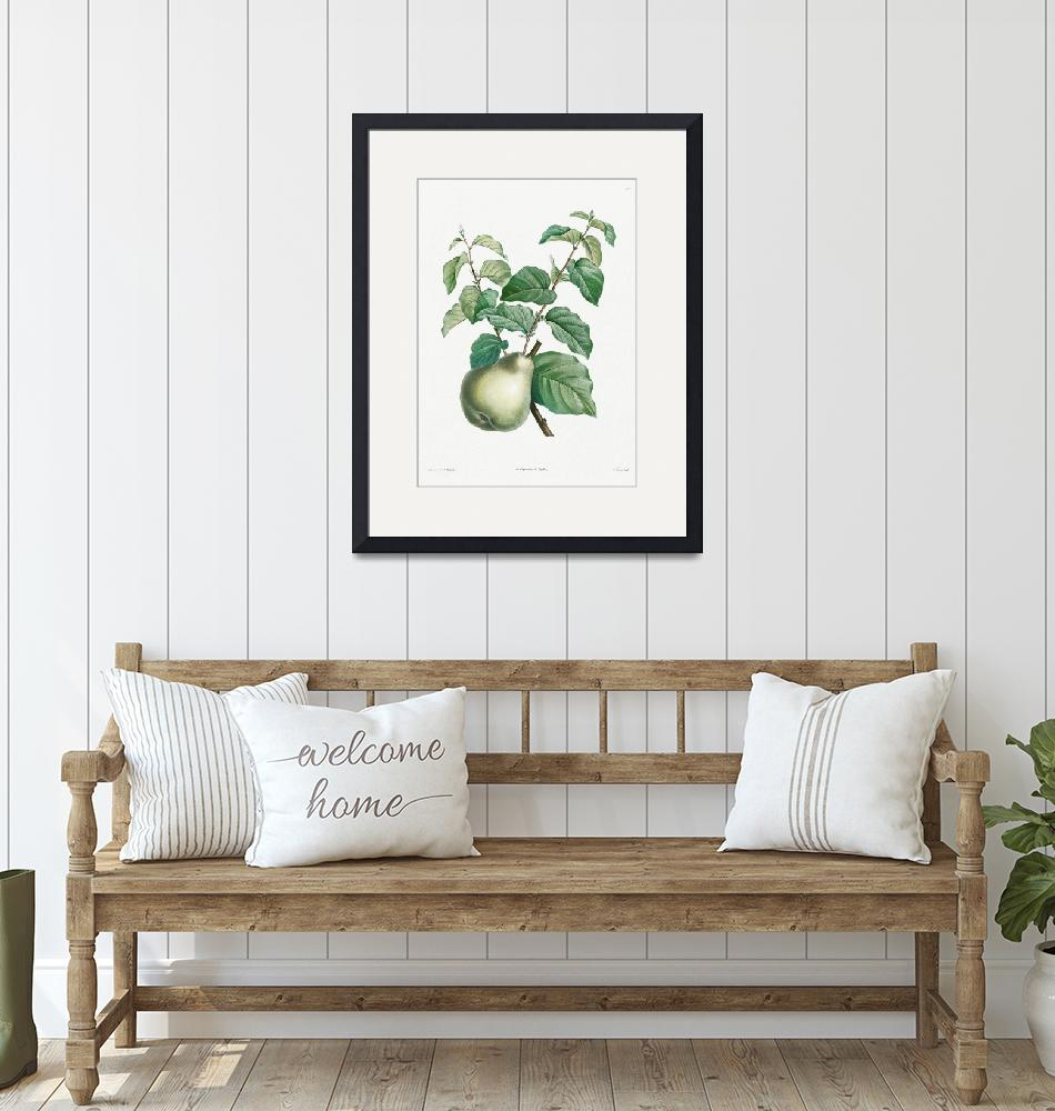 """Pear Fruit Vintage Botanical""  by FineArtClassics"