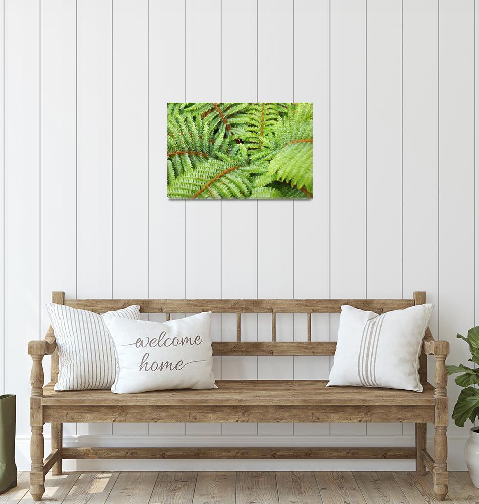 """Ferns Fronds Leaves Art Prints Forest Fern""  (2014) by BasleeTroutman"