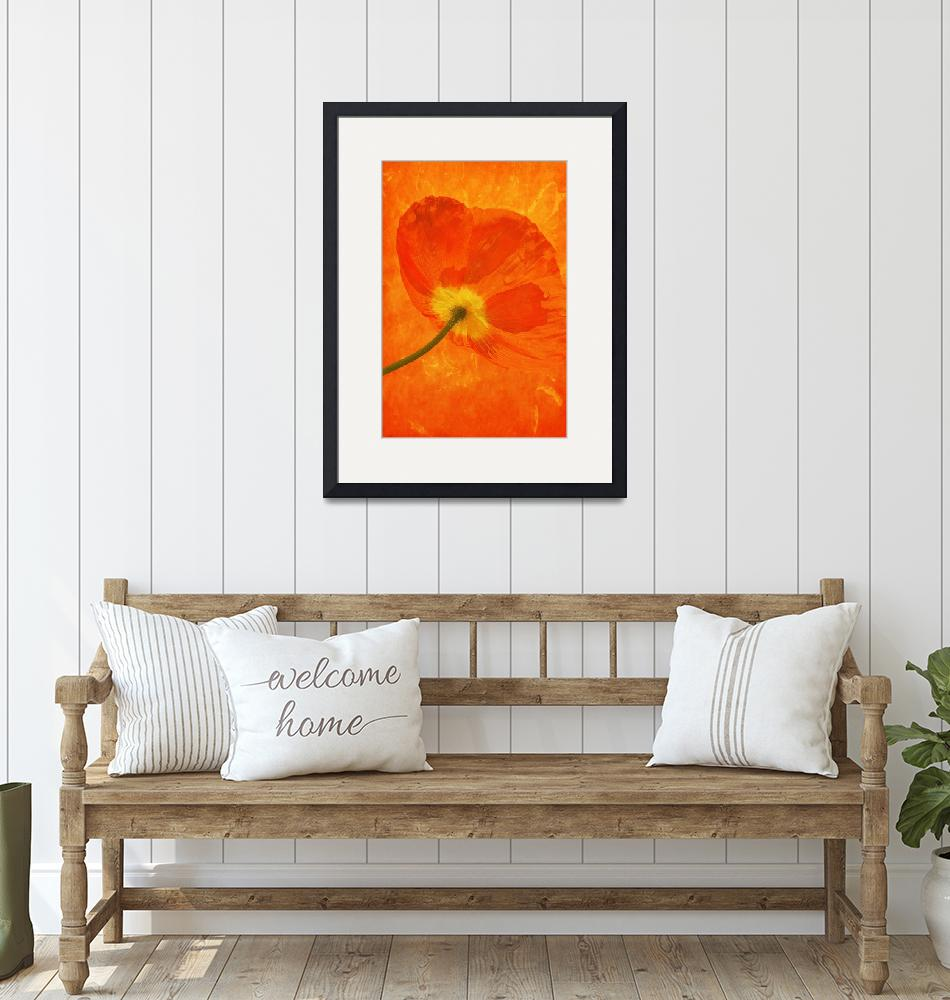 """Orange Poppy""  (2015) by SoulfulPhotos"