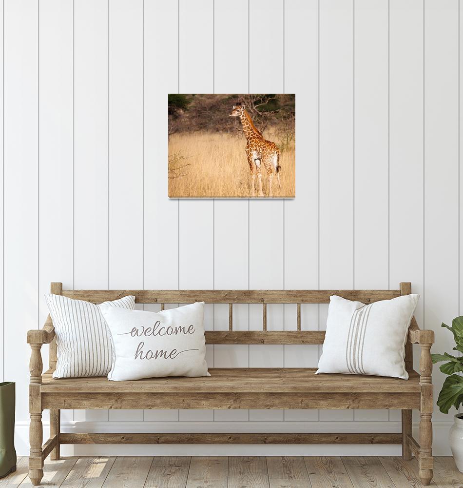 """Baby Giraffe, Masai Mara, Kenya""  (2012) by mjphoto-graphics"