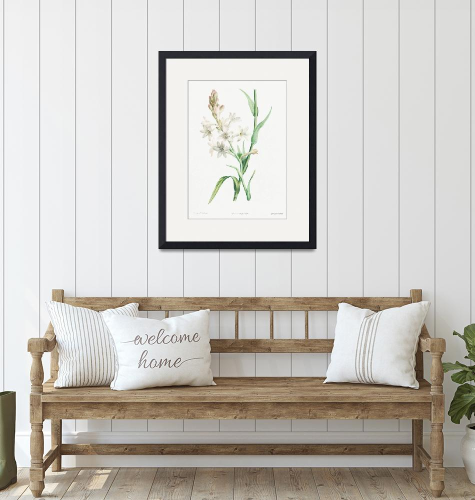 """Tuberose, Polianthes Tuberosa Vintage Botanical""  by FineArtClassics"