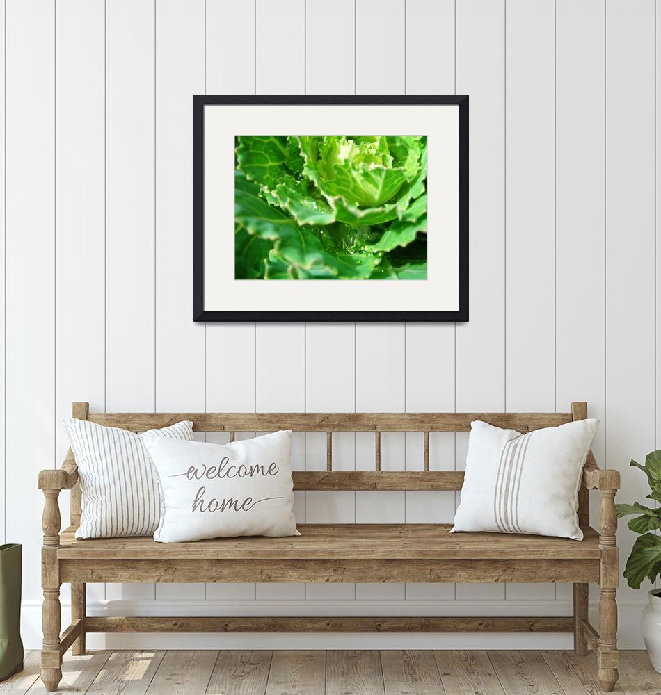 """""""lettuce""""  by saidshe"""