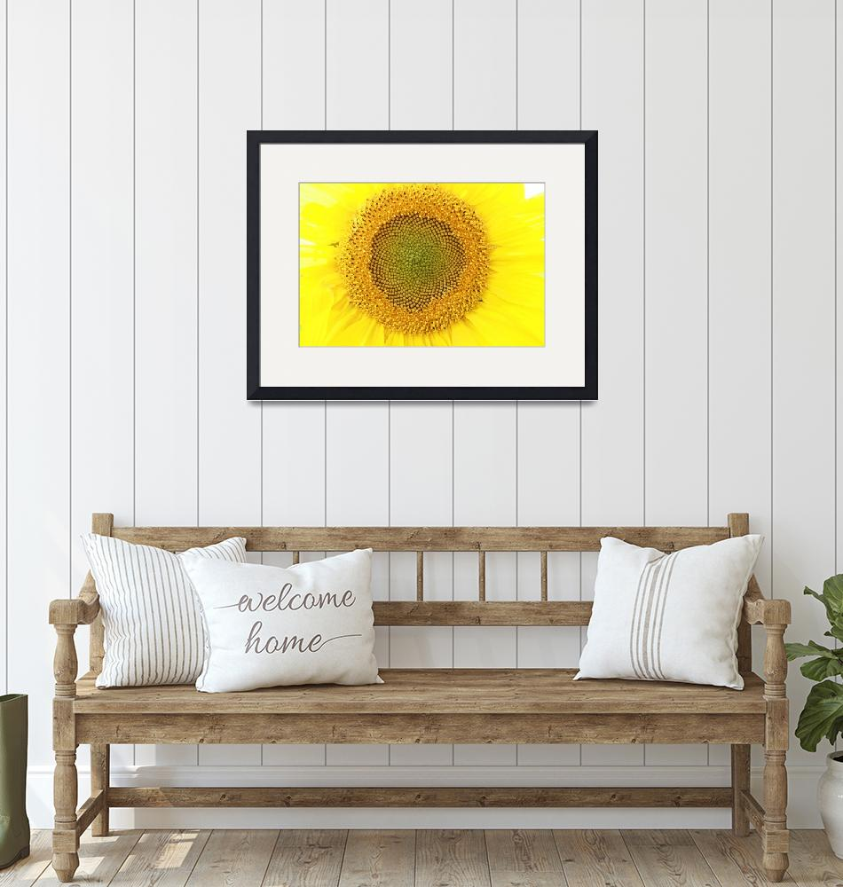 """Sunflower""  (2013) by rhamm"