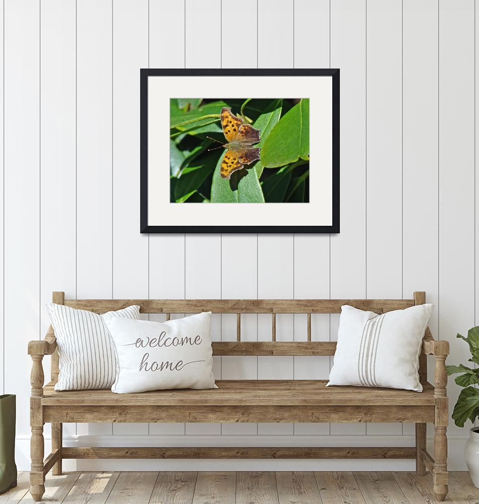 """""""Question Mark Butterfly  Polygonia interrogationis""""  (2014) by MotherNature1"""