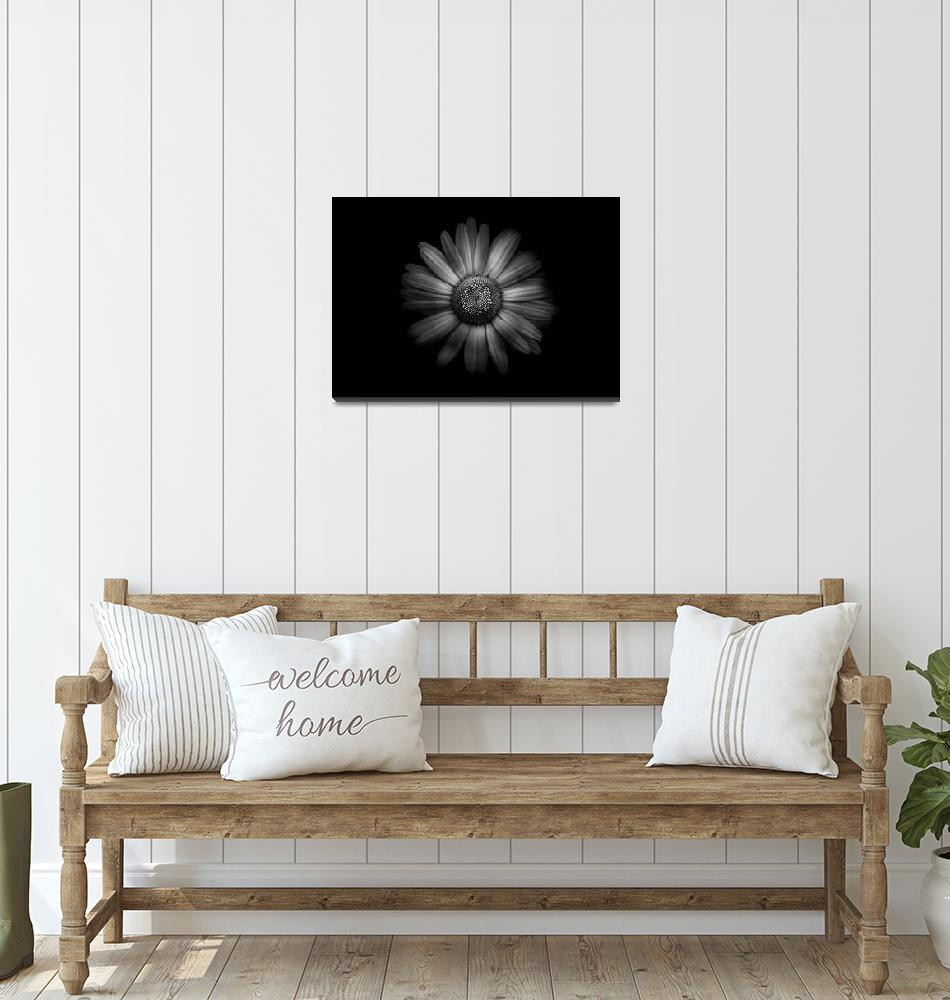 """""""Backyard Flowers In Black And White 31""""  (2018) by thelearningcurvephoto"""