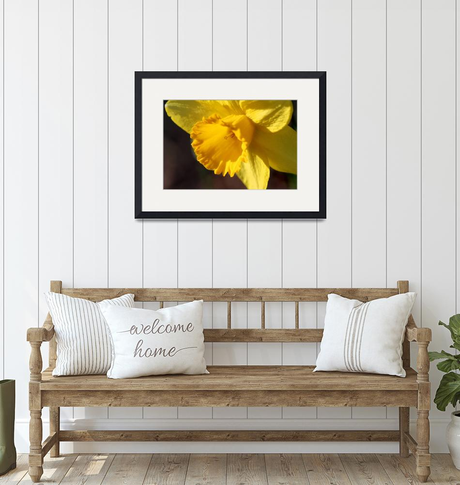 """Yellow Daffodil Trumpet""  (2016) by KsWorldArt"