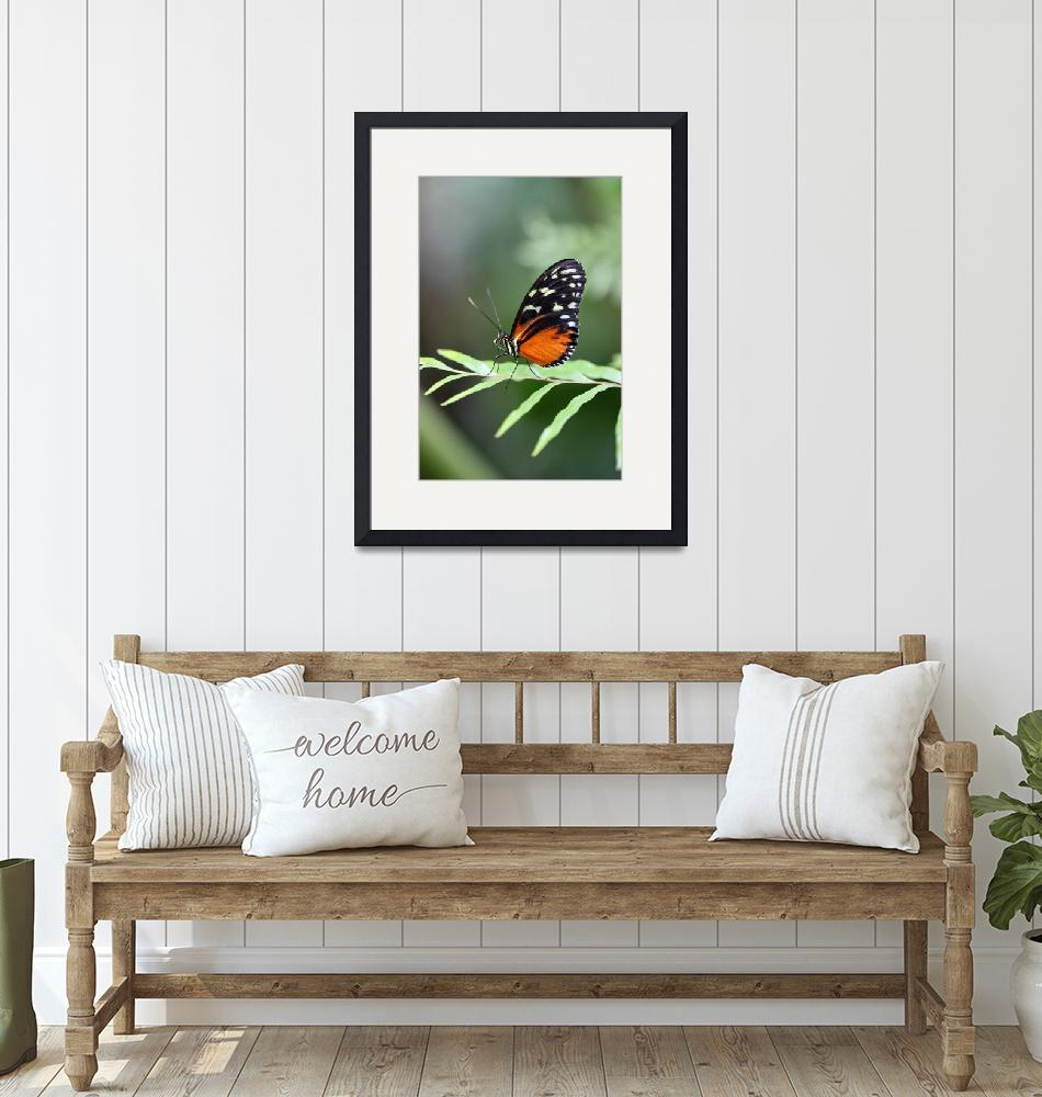 """Hecale Longwing Butterfly Vertical""  (2017) by KsWorldArt"