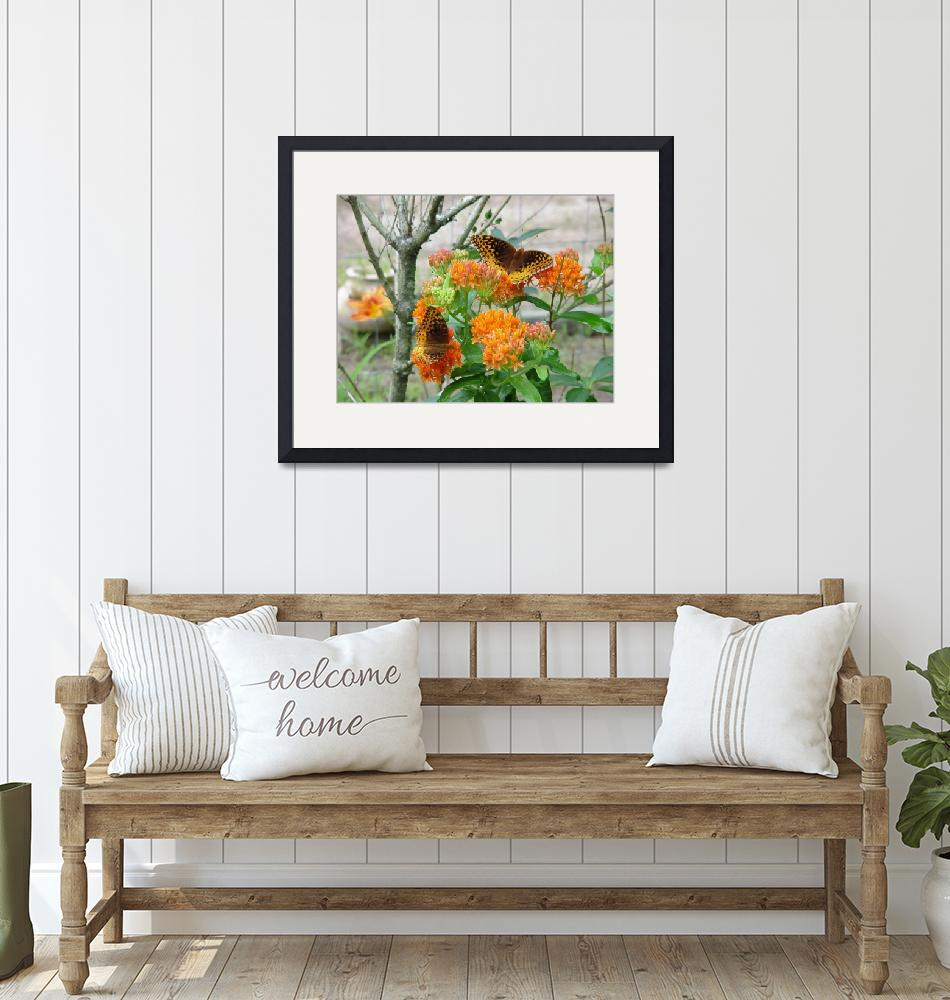 """""""Double Butterfly Milkweed""""  by rjackson"""
