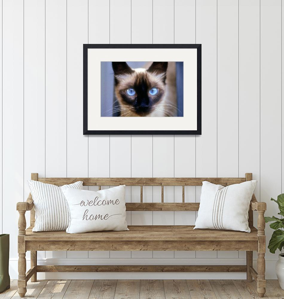 """""""A Cat With The Blue Eyes""""  (1993) by JoaoPonces"""