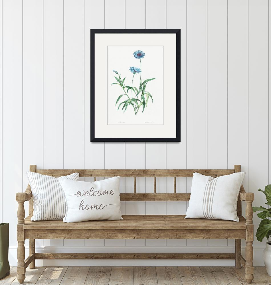 """Blue Flower Vintage Botanical"" by FineArtClassics"