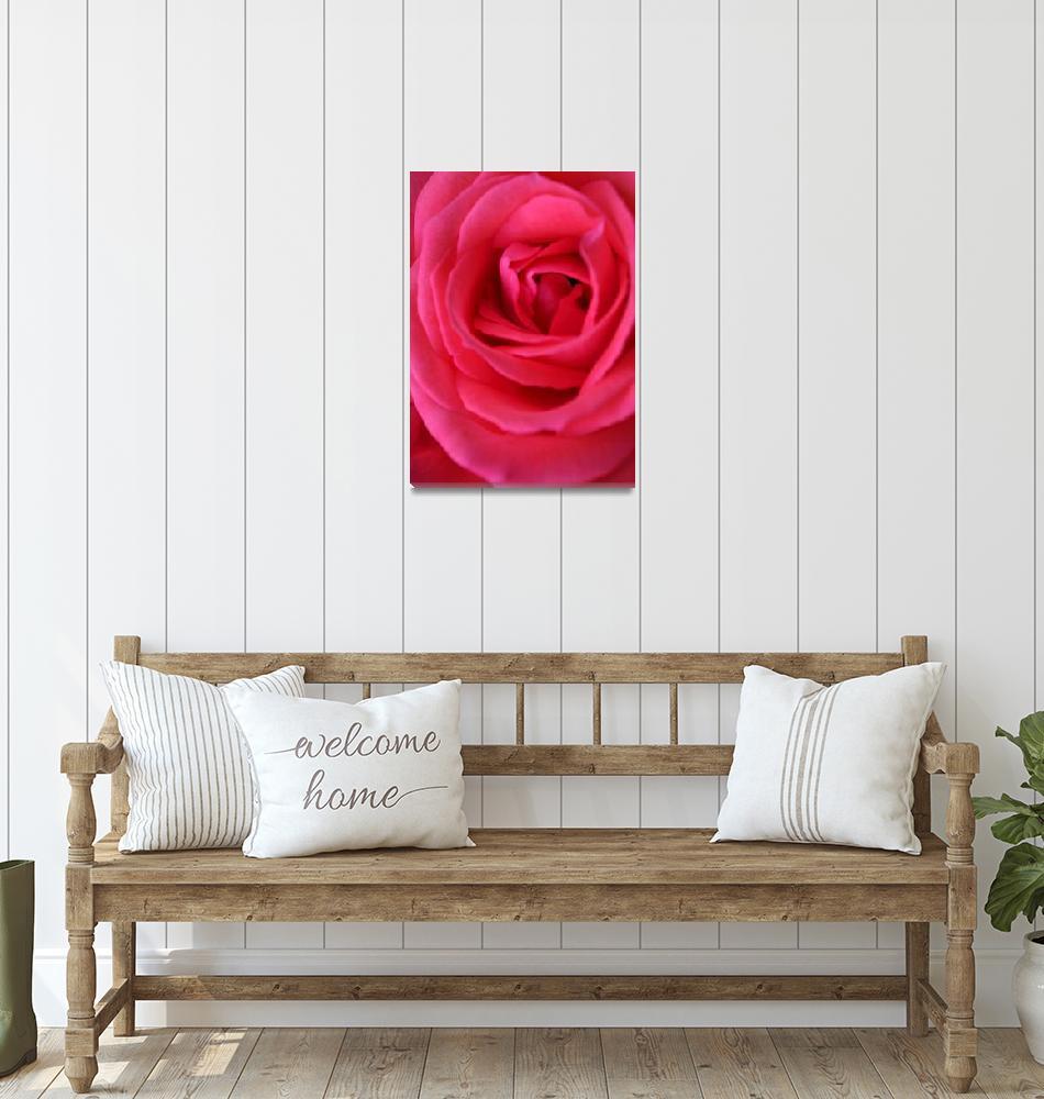 """Pink Rose      0358""  (2010) by BarbaraLin"