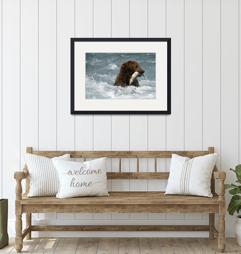 """Grizzly Fishing for Chum in McNeil River Alaska""  by DesignPics"
