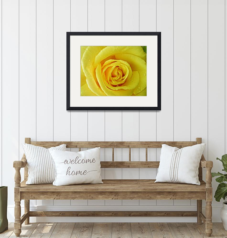 """""""Yellow Rose of""""  (2009) by susanboogie"""