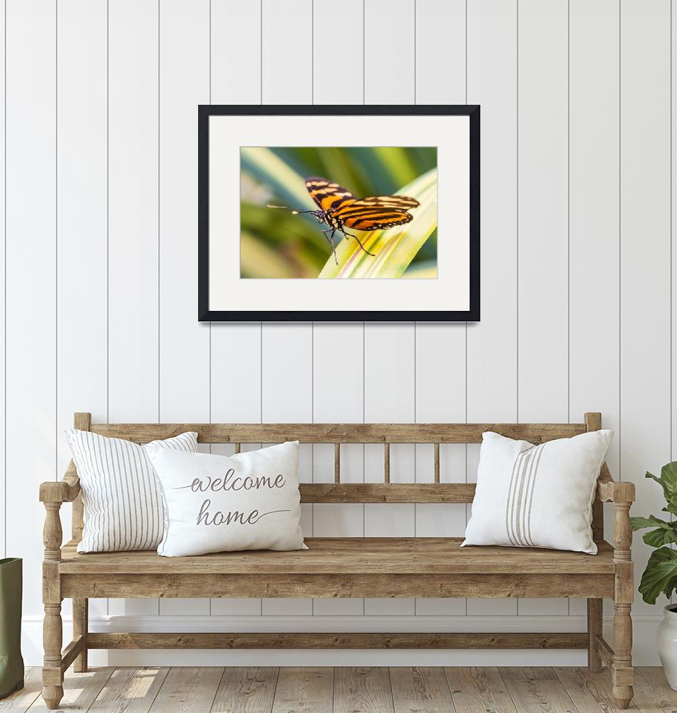 """""""orange banded butterfly""""  (2013) by puravidaviews"""
