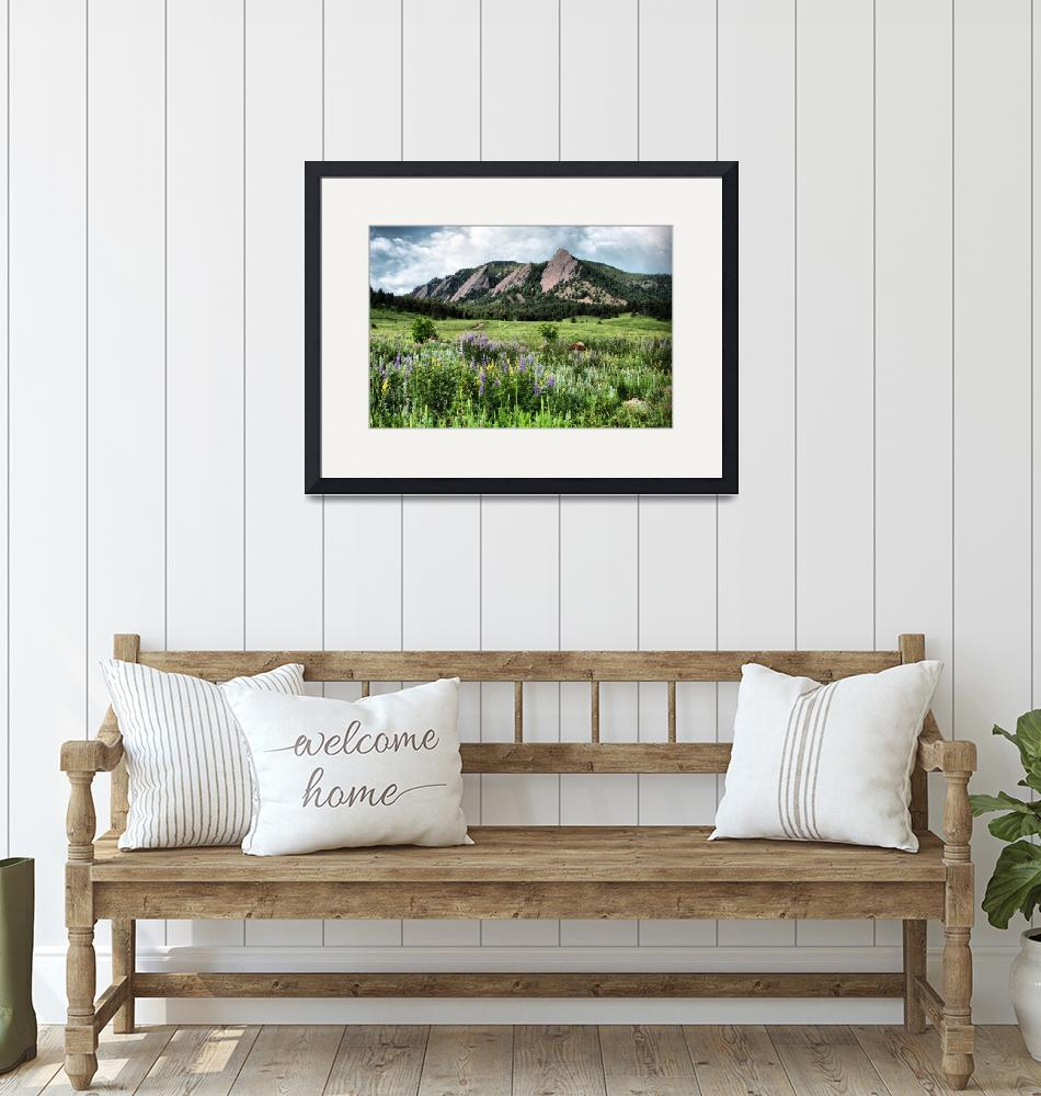 """""""331/365 Flatirons and Wildflowers""""  by NigelBrown"""