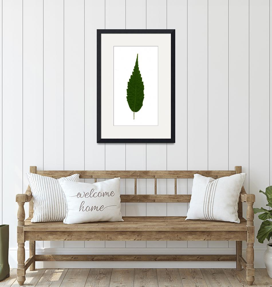 """""""green leaf""""  (2018) by jnanian"""