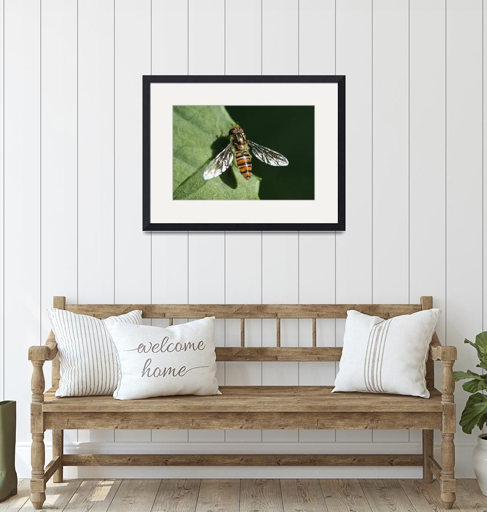 """""""Hover Fly On Green Foliage""""  (2011) by edesigns15"""