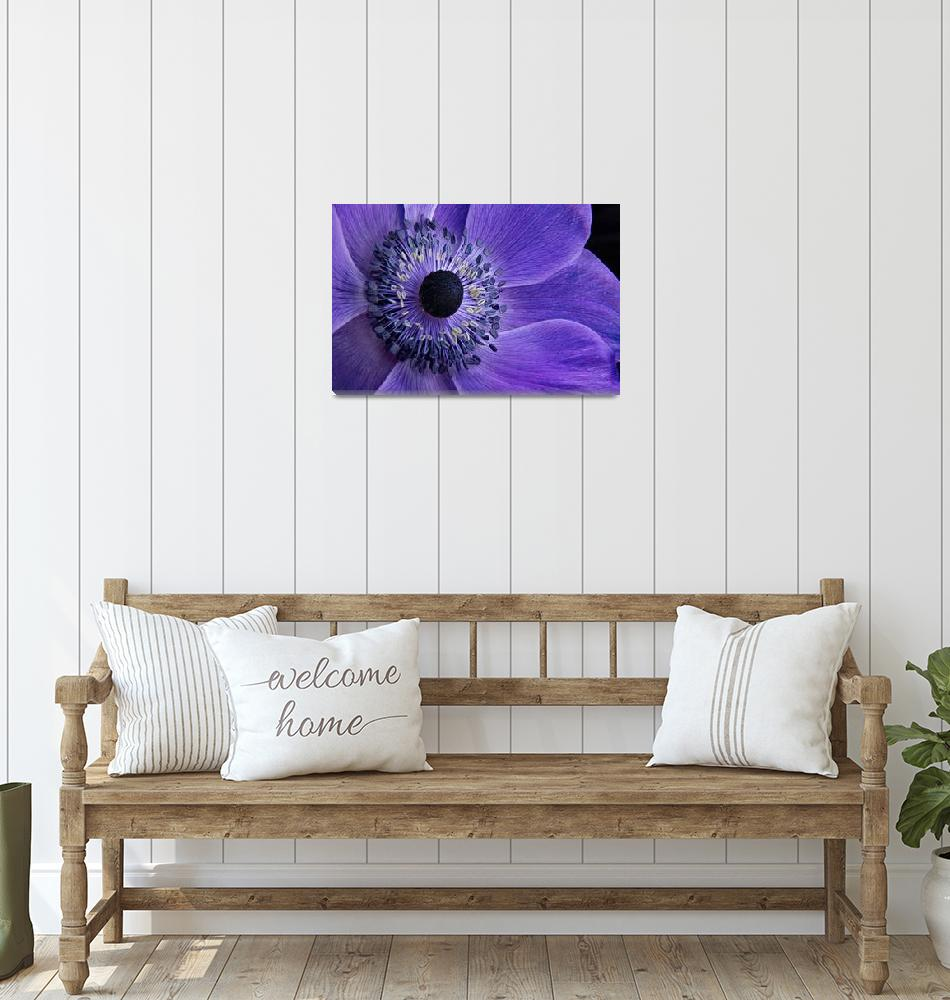 """""""Purple Anemone""""  (2013) by AnnG"""