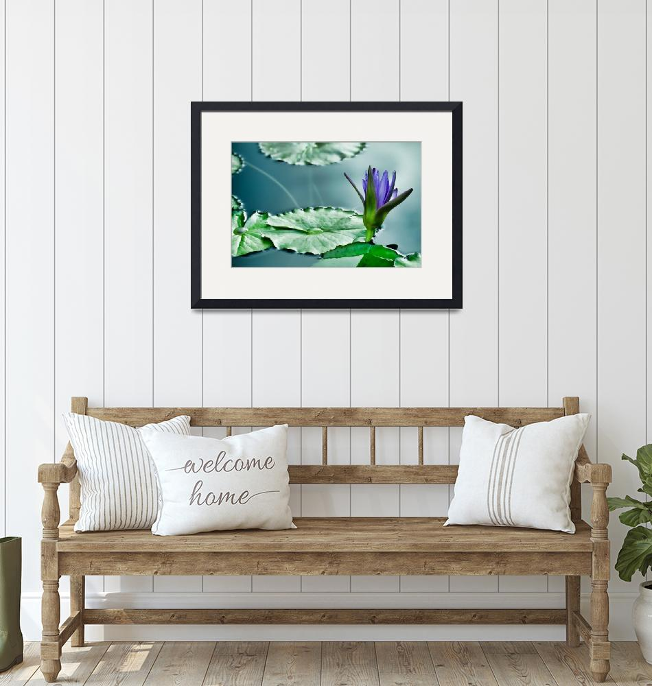 """""""Purple Water Lily"""" (2014) by boppintheblues"""