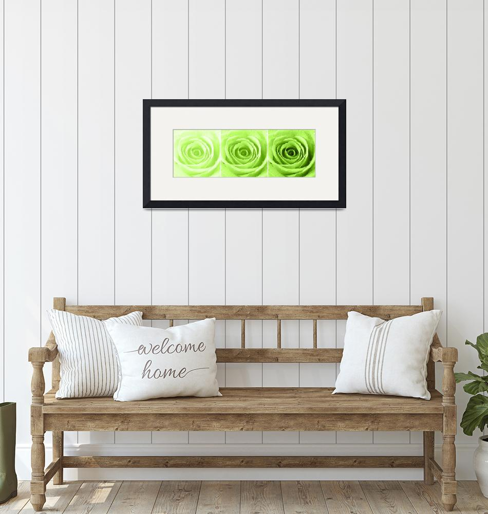 """Lime Green Rose with Water Droplets Triptych""  (2012) by NatalieKinnear"