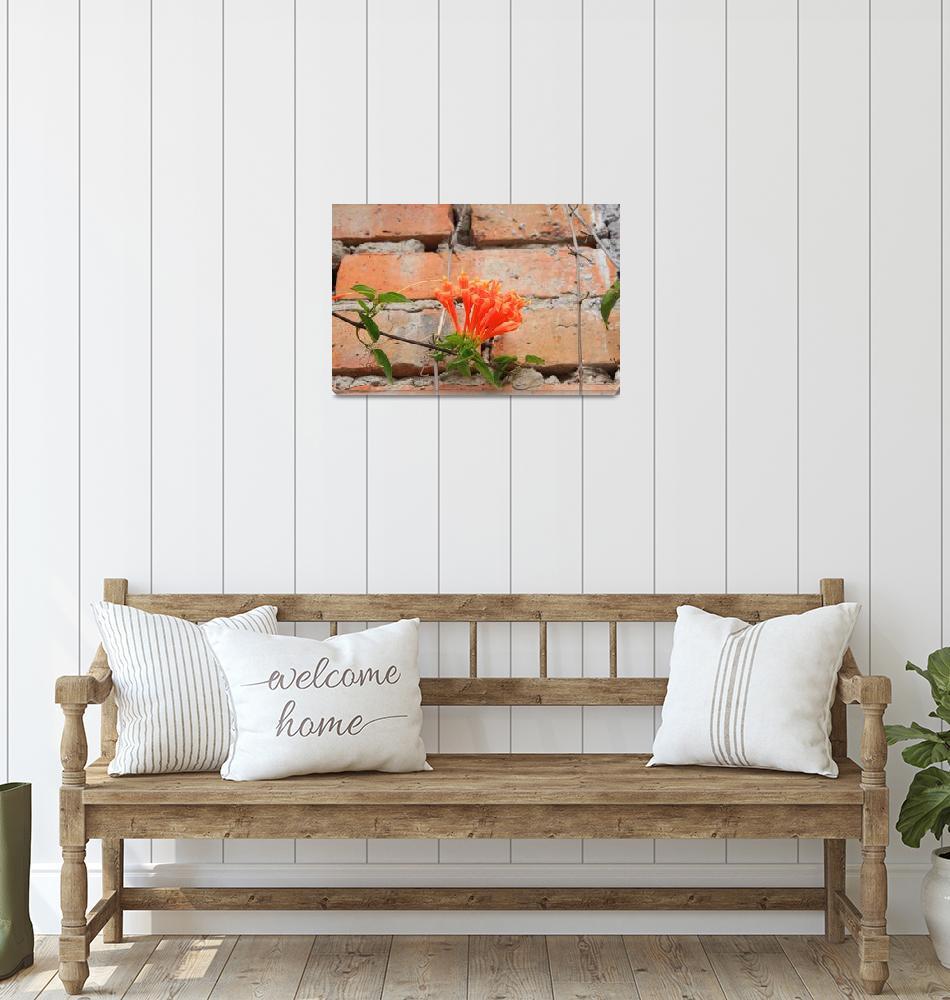"""""""Orange Flowers and Adobe Wall""""  (2016) by rhamm"""