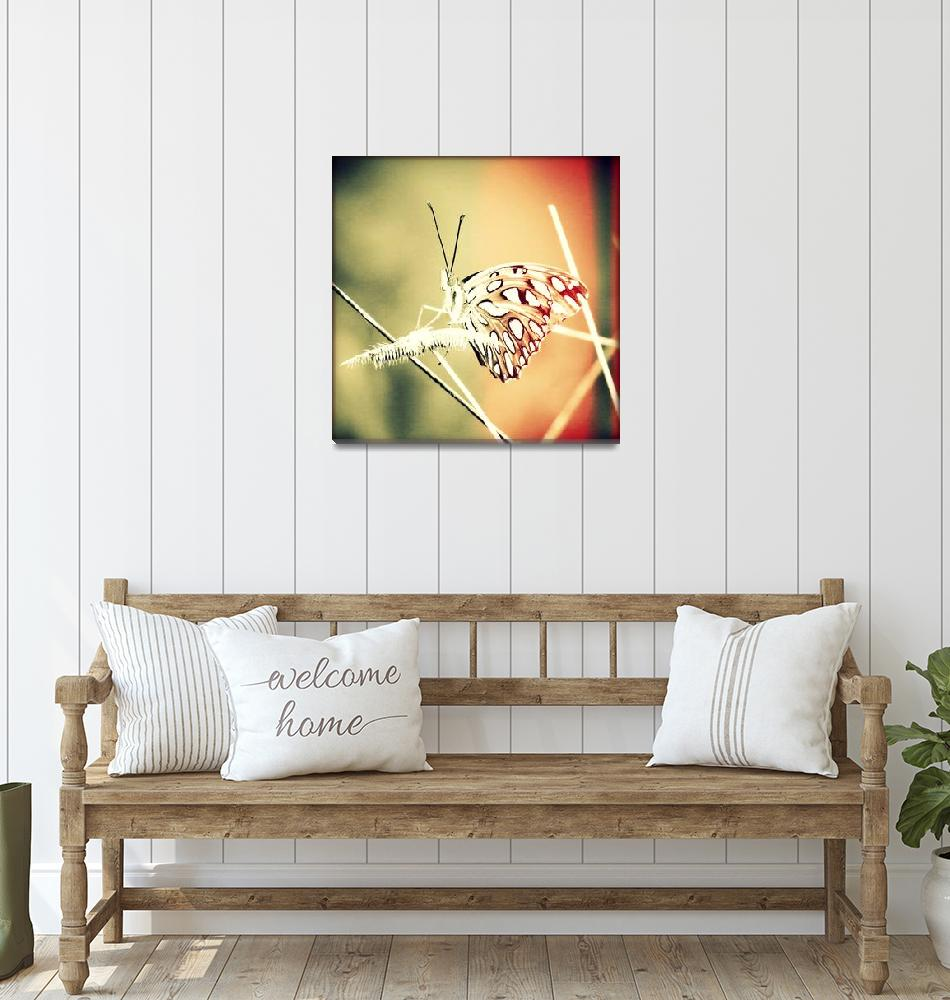 """Bonita Butterfly - Extreme Sunset""  (2014) by ChrisAndruskiewicz"