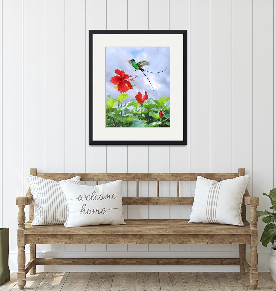 """Red-Billed Streamertail Hummingbird and Hibiscus""  (2015) by spadecaller"