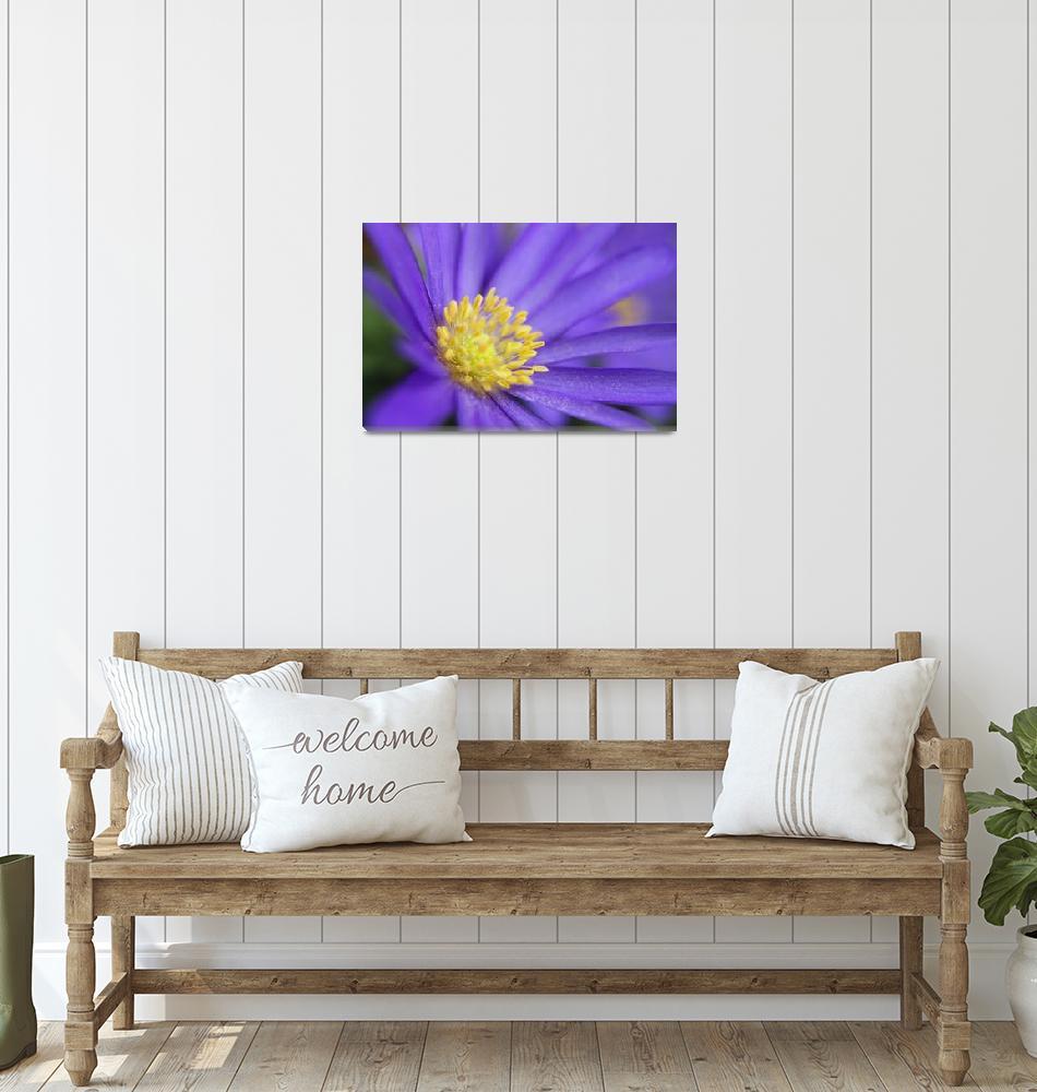 """""""Purple flower yellow Pollen""""  by ScottHovind"""