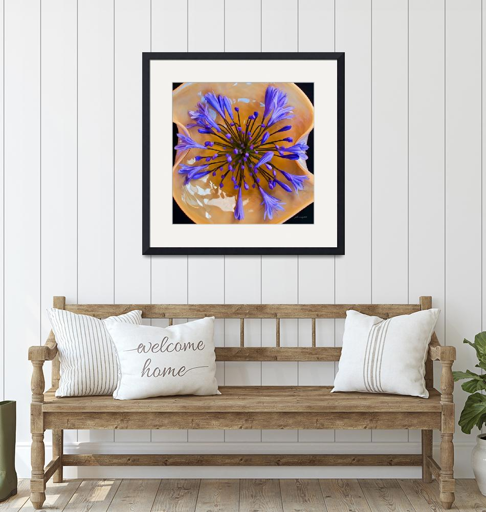 """""""Agapanthus Watercolor""""  (2010) by johncorney"""