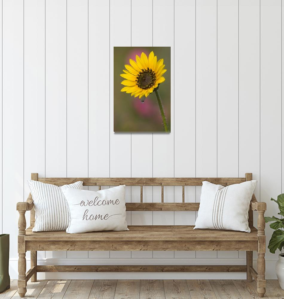 """Sunflower and Dew Drop""  (2006) by erikpronske"