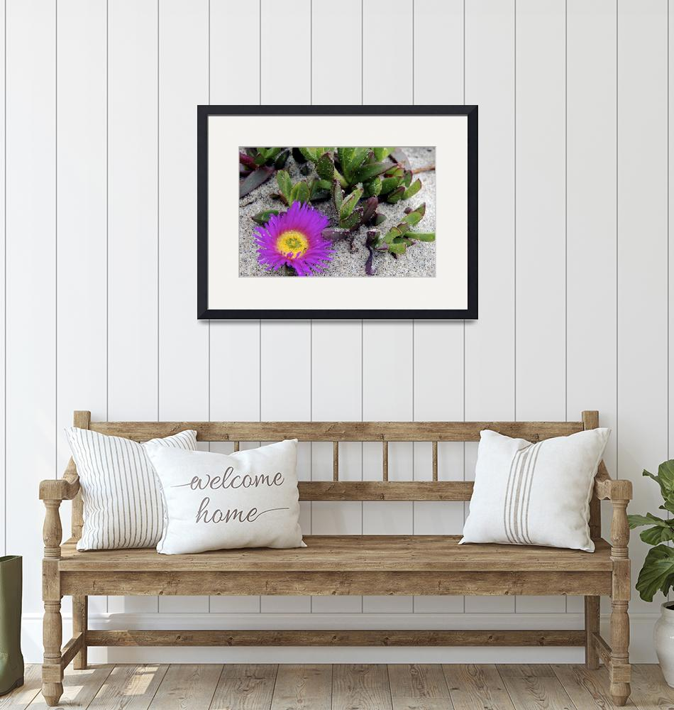 """""""Ice Plant On the California Coast"""" (2010) by annettesfavoritephotos"""