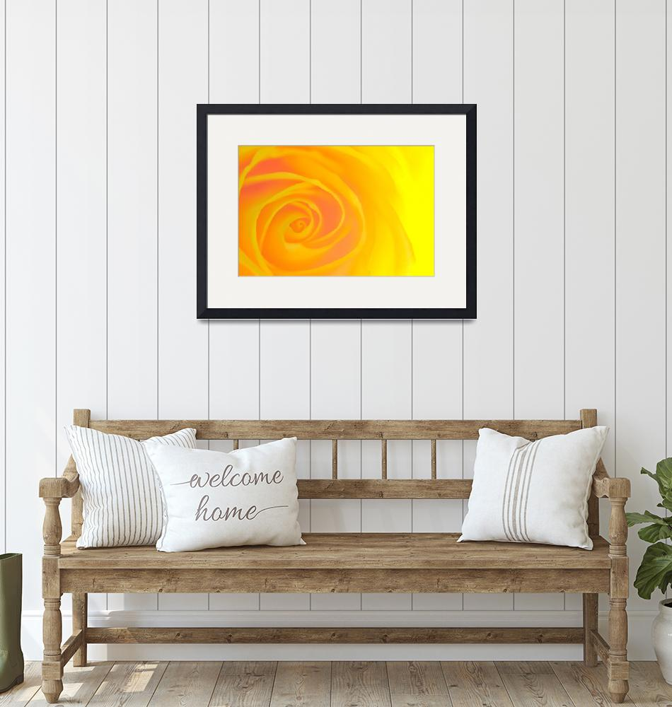 """""""Yellow Rose""""  by neilcreek"""