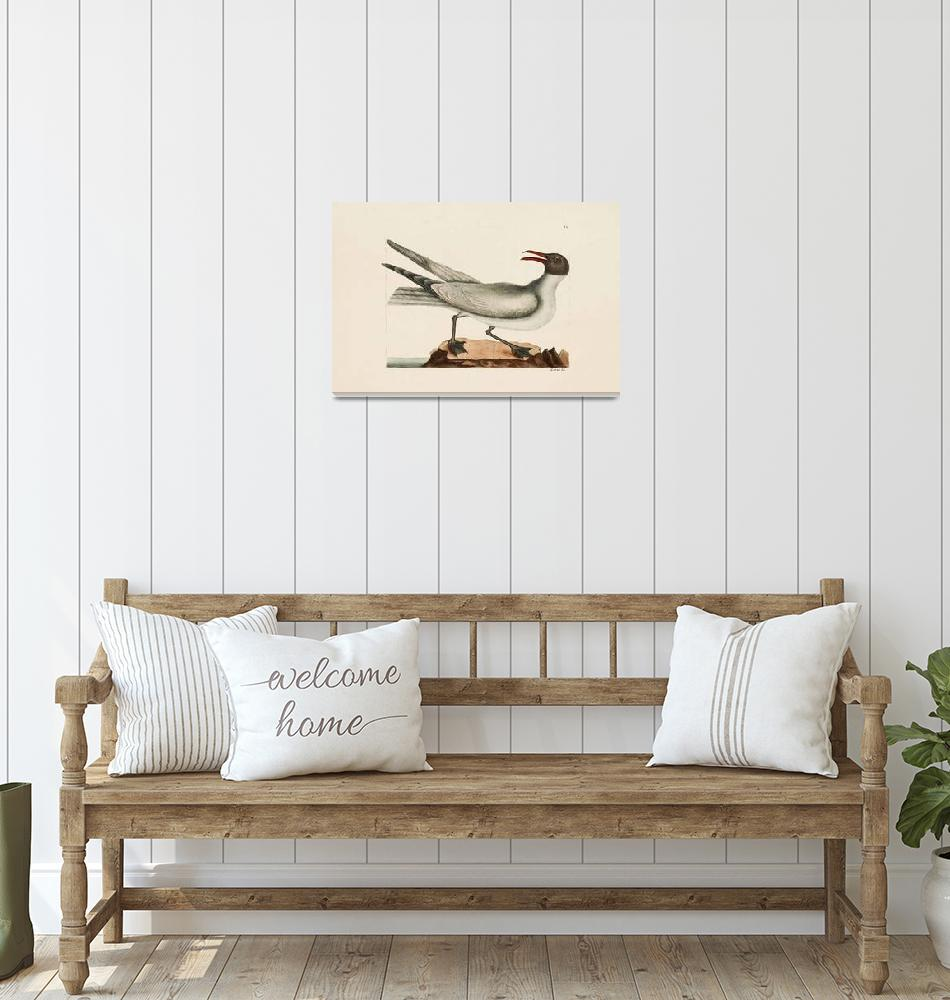 """""""Mark Catesby~The Laughing Gull, The Natural Histor""""  by Old_master"""