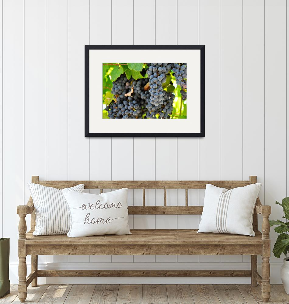 """""""Fruit of the Vine, Before turning Wine""""  (2010) by b_r1s1n9"""