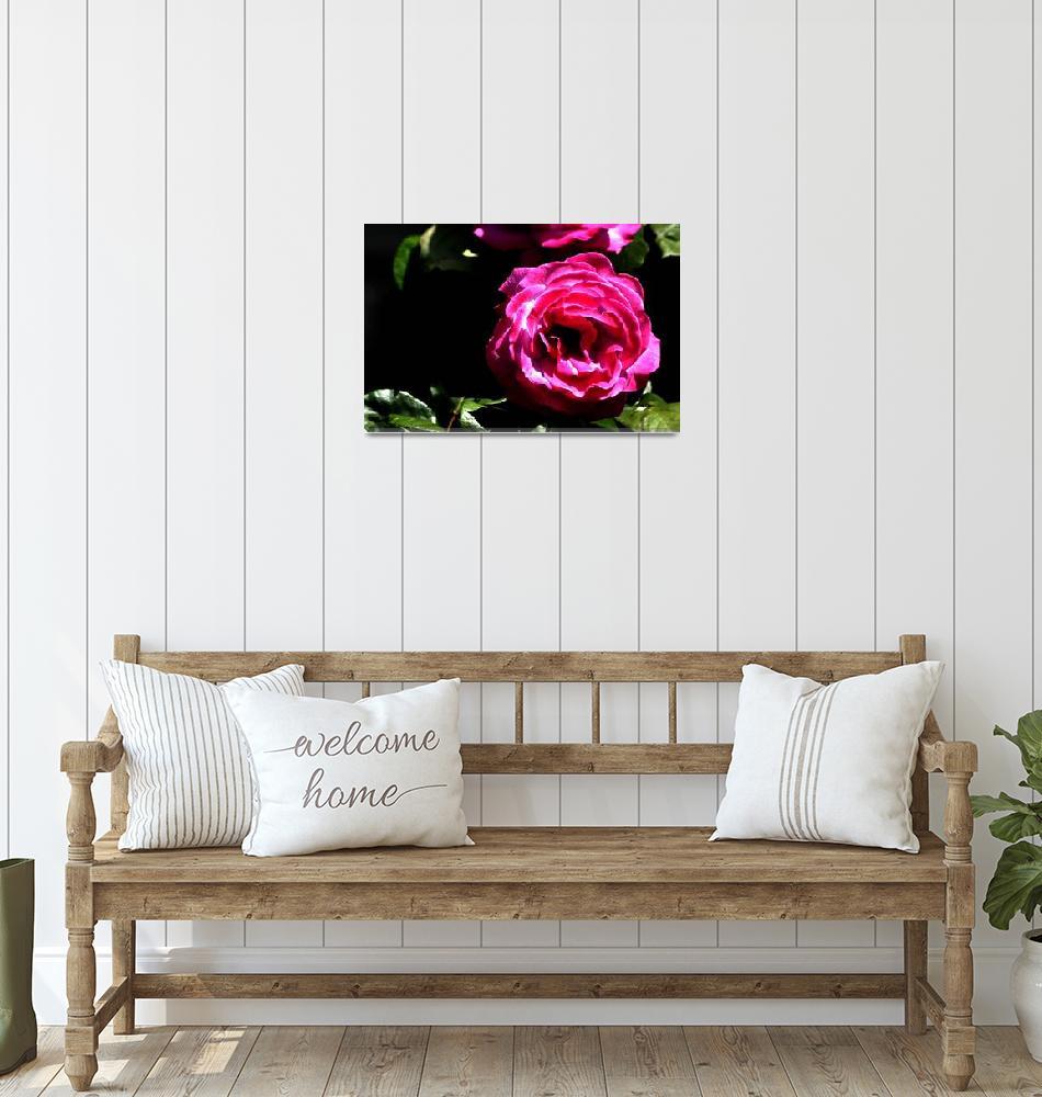 """""""Pink Rose""""  by Tanjasart"""