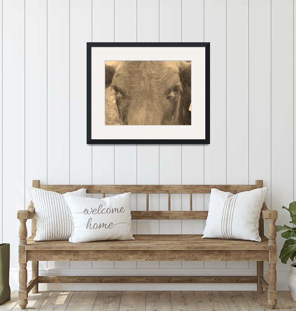 """""""Brown Cow""""  (2009) by Hartphotography"""