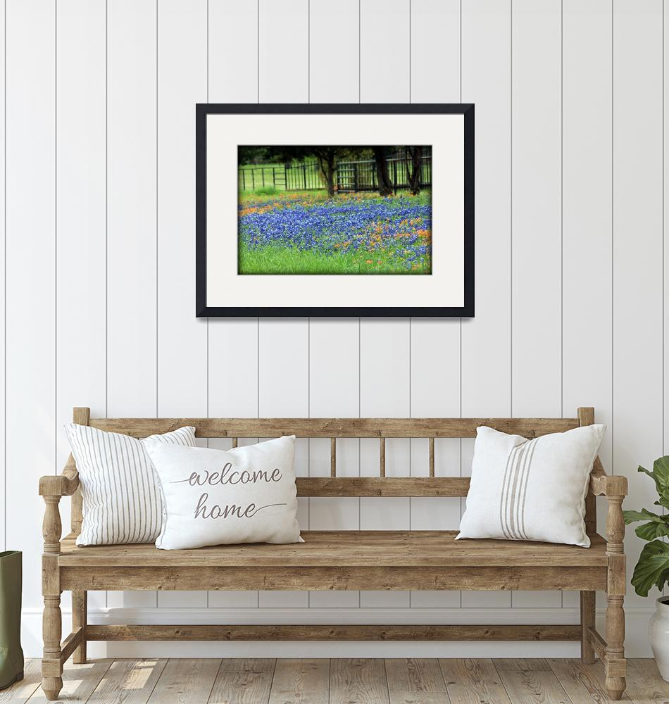 """""""Bluebonnets And Paintbrushes""""  by bettynorthcutt"""