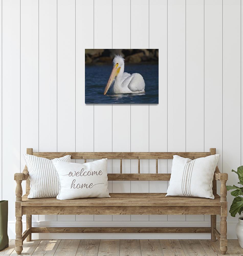 """""""American White Pelican (Pelecanus erythrorhynchos""""  by mikebaird"""