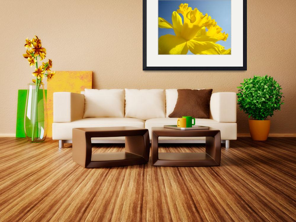 """""""Spring Artwork Sunlit Daffodil Flowers Floral Art&quot  (2010) by BasleeTroutman"""