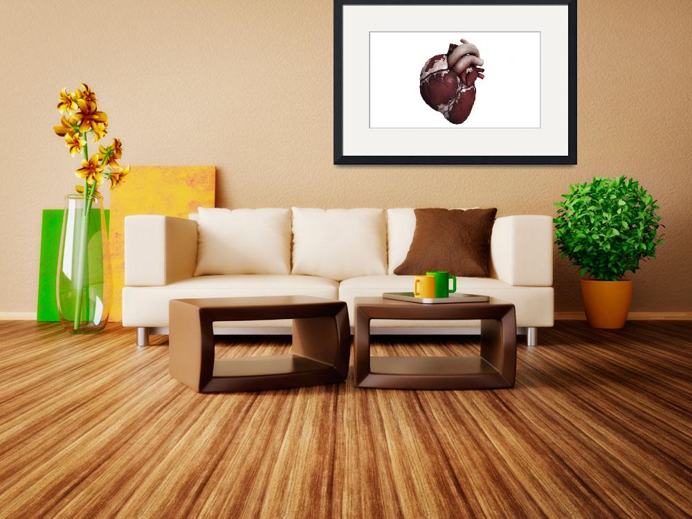 """Three dimensional view of human heart, front&quot  by stocktrekimages"