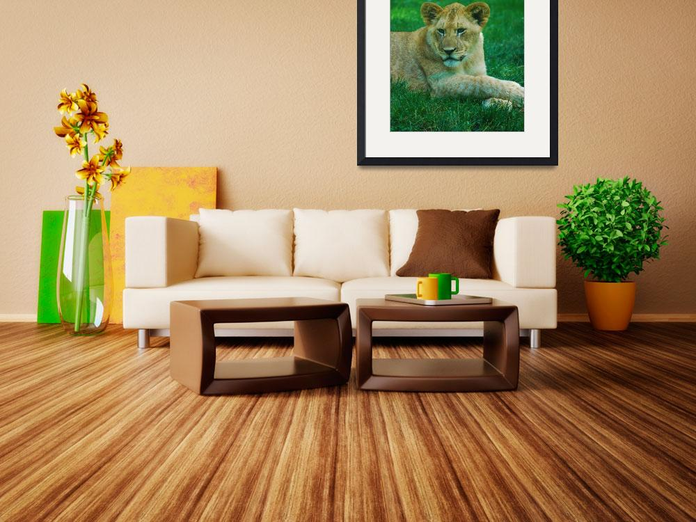 """""""Lounging Lion""""  by DVMPat"""