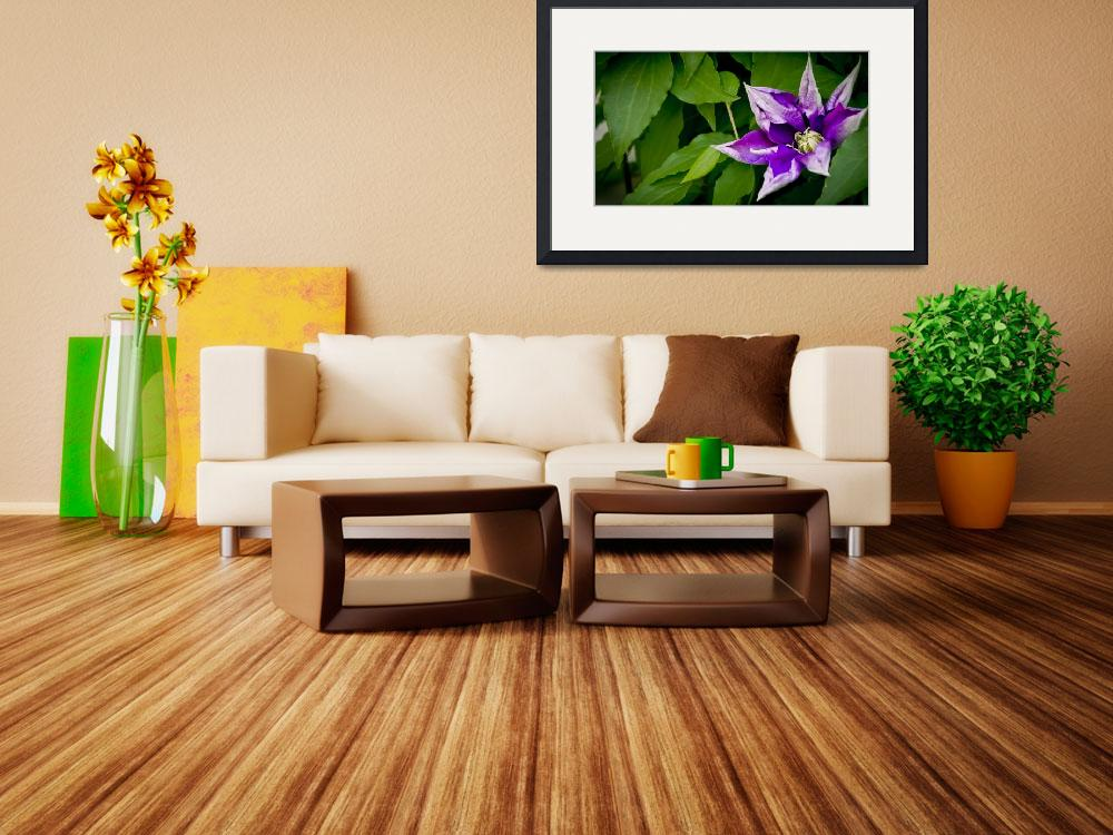 """""""Clematis Flower""""  (2012) by NCCreations"""