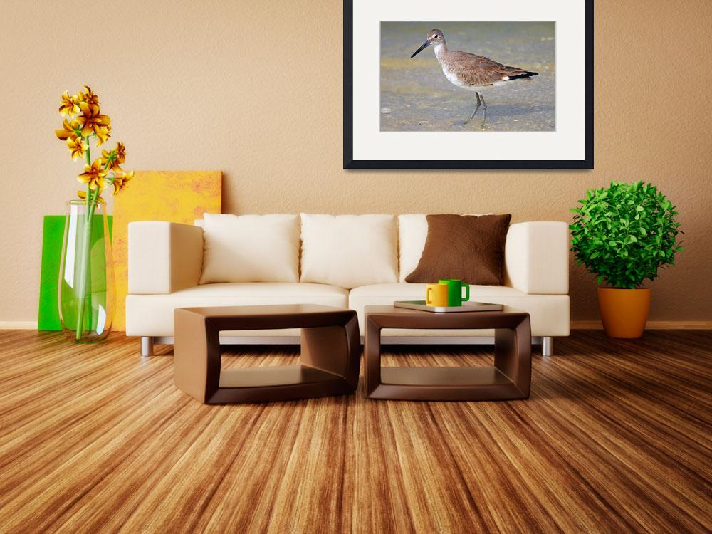 """""""Spotted Sandpiper&quot  (2010) by shelshots"""