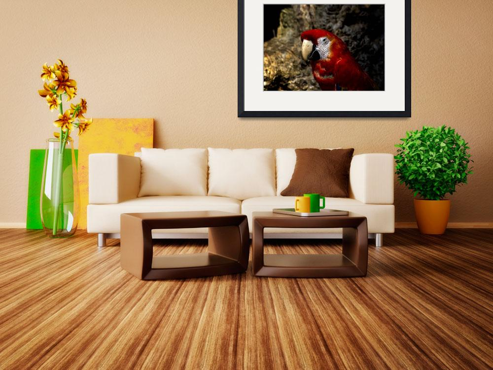 """""""Red Parrot&quot  (2014) by loversdream"""