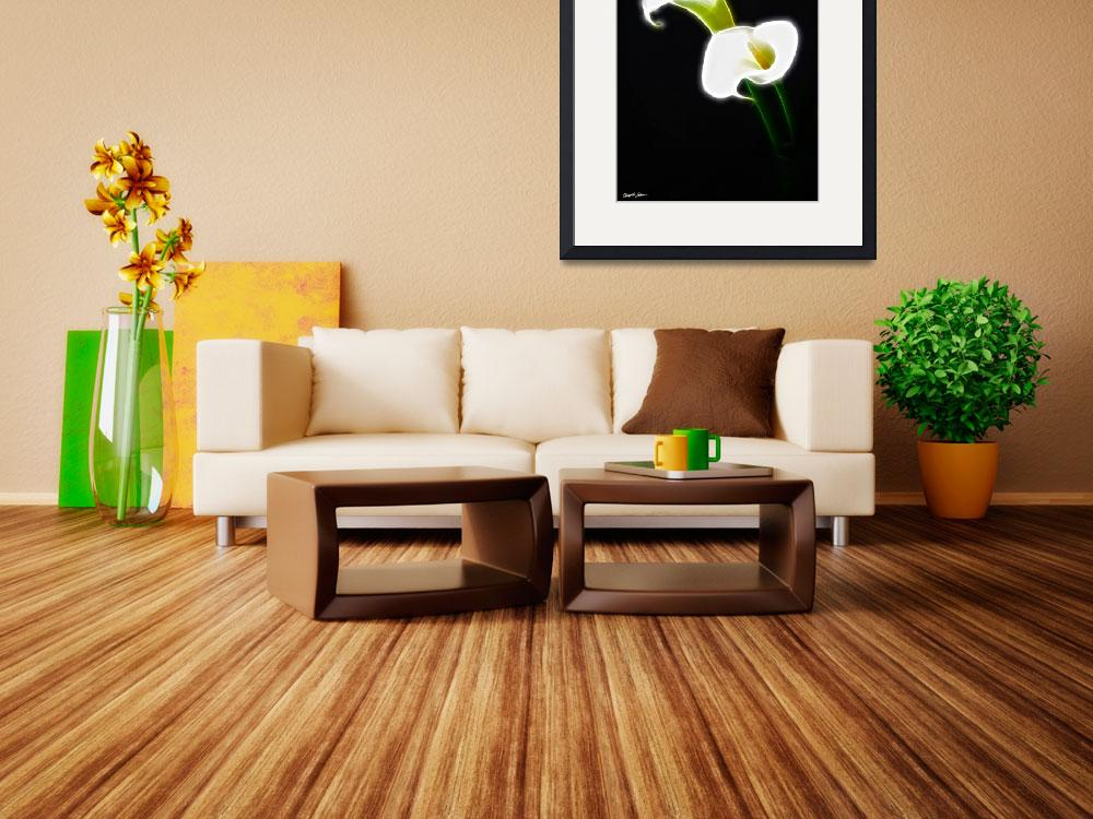 """""""Elegant Calla Lily Flowers 1 Modern&quot  (2011) by ChristopherInMexico"""