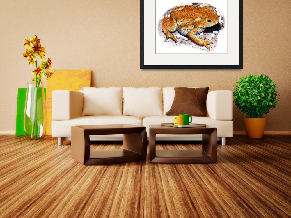 """""""American Toad""""  by inkart"""