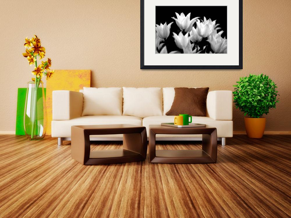 """""""Tulips in Black and white&quot  by jfrphoto"""