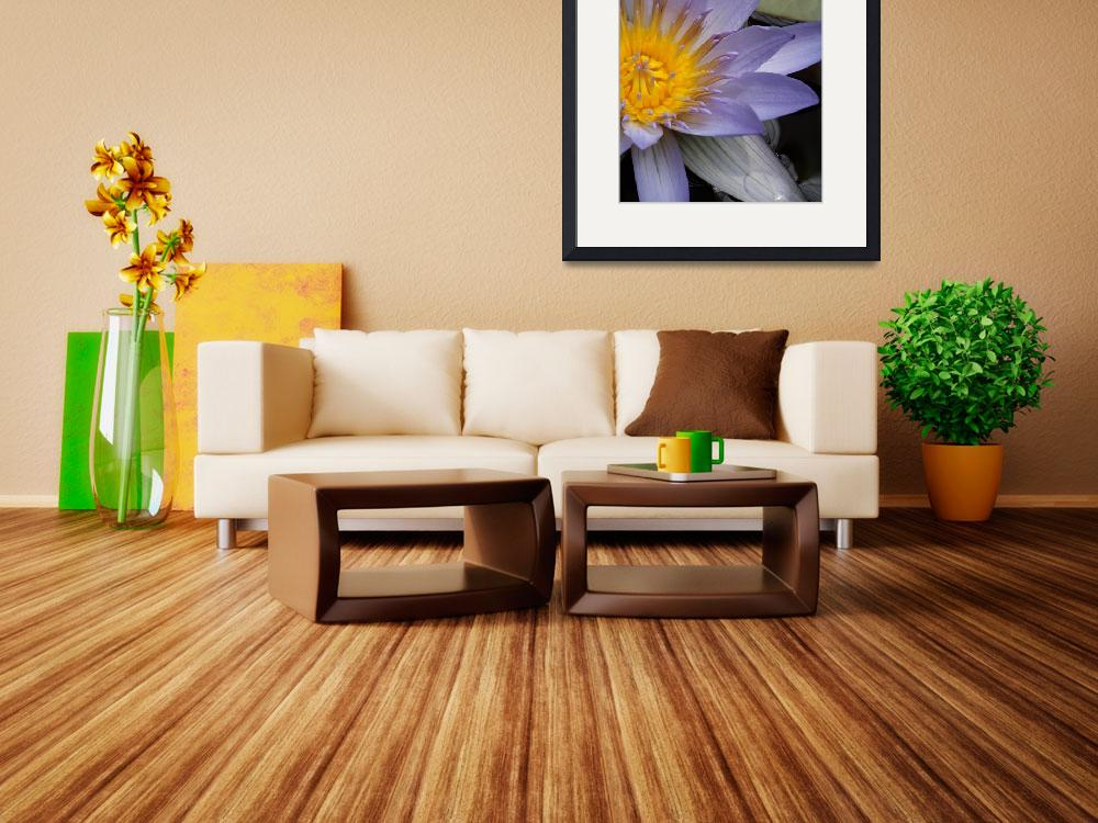 """""""Modern Tranquility  - Water Lily II&quot  (2011) by PurpleSkyPhoto"""