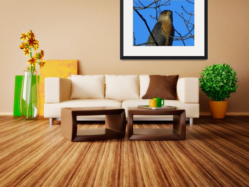"""""""The Coopers Hawk""""  by SHickman"""